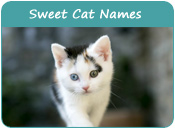 Sweet Cat Names