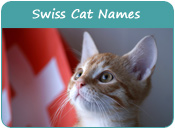 Swiss Cat Names
