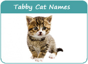 Tabby Cat Names