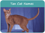 Tan Cat Names