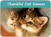 Thankful Cat Names