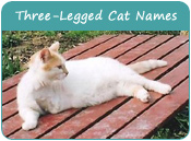 Three-Legged Cat Names