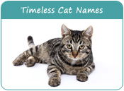 Timeless Cat Names