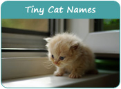 Tiny Cat Names