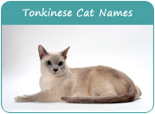 Tonkinese Cat Names