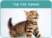 Top Cat Names