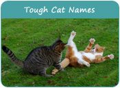 Tough Cat Names