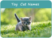 Toy Cat Names