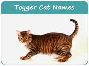 Toyger Cat Names