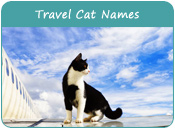 Travel Cat Names