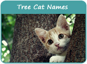 Tree Cat Names