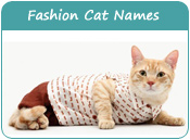 Trendy Cat Names