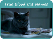 True Blood Cat Names