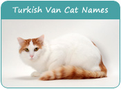 Turkish Van Cat Names