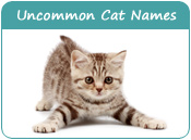 Uncommon Cat Names
