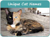 Unique Cat Names