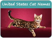 United States Cat Names