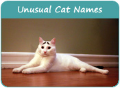 Unusual Cat Names
