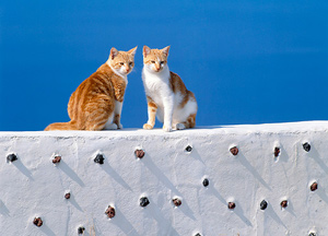 Unique Greek Cat Names For Female Kittens