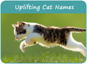 Uplifting Cat Names