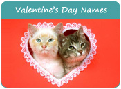 Valentine's Day Cat Names