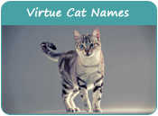 Virtue Cat Names