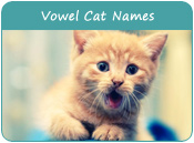Vowel Cat Names