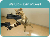 Weapon Cat Names
