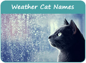 Weather Cat Names