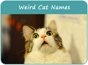 Weird Cat Names