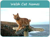 Welsh Cat Names