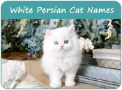 White Persian Cat Names