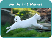 Windy Cat Names