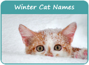 Winter Cat Names