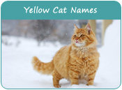Yellow Cat Names